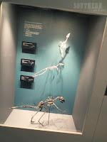 Australian Museum, Sydney - Dinosaur Skeletons