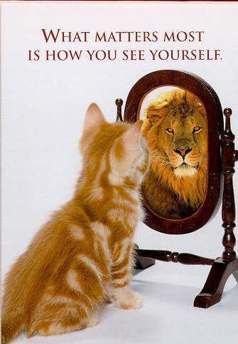 funny cat picture cute kitty pic kitten looking in mirror seeing a lion