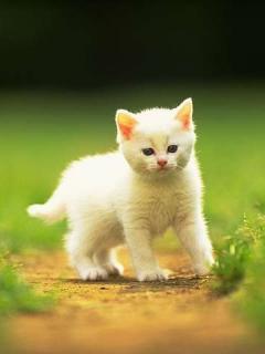 Hình nền về mèo con dễ thương ngộ nghĩnh