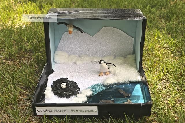 Chinstrap Penguin Diorama