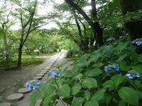 庭園歩道とアジサイ