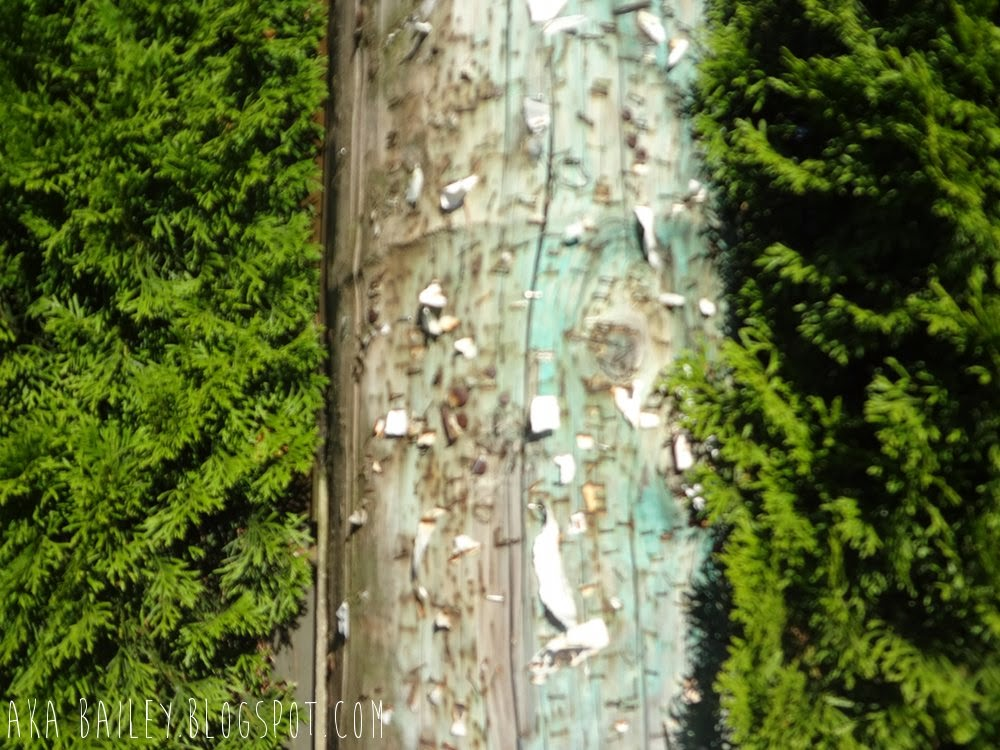 Telephone poll covered with staples, nestled between two green hedges