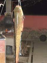 Pescuit sportiv  in Cazanele Dunarii