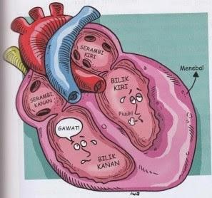 Obat Herbal Infeksi Jantung