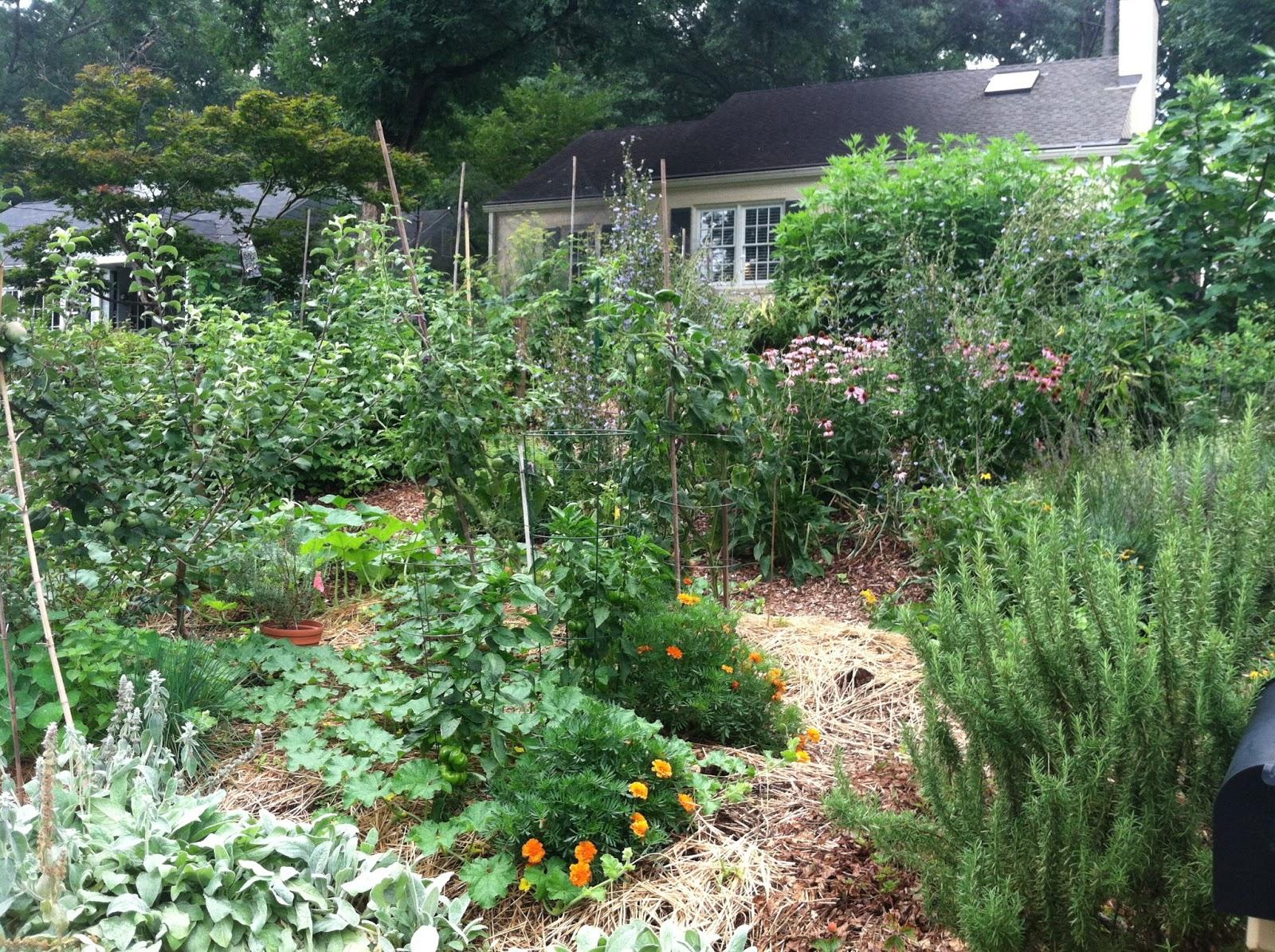 Front yard gardens - Front Yard Garden Monday July 8 2013