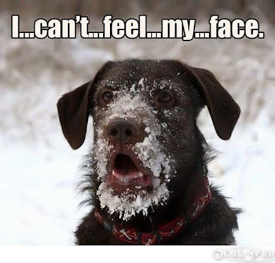 Funny dogs and lol dogs ,The frozen dog