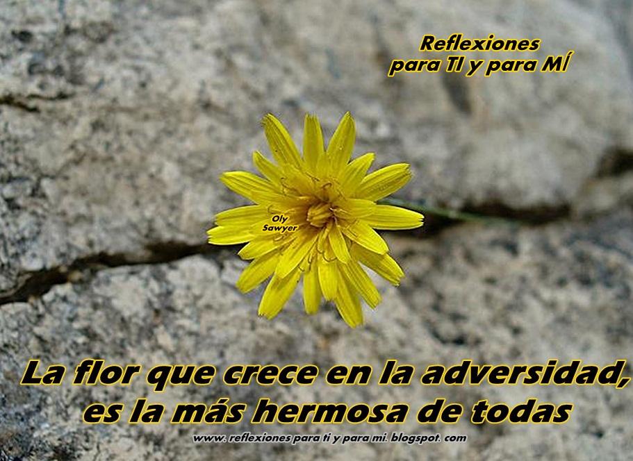 La flor que crece en la adversidad es la más hermosa de todas