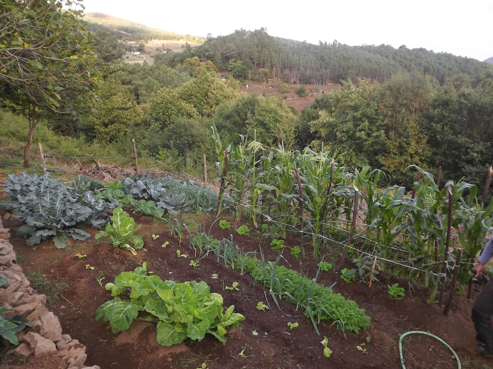 cultivar alimentos organicos