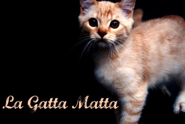 La Gatta Matta