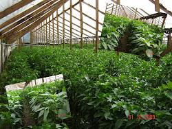 Rubros: Hortalizas en invernadero