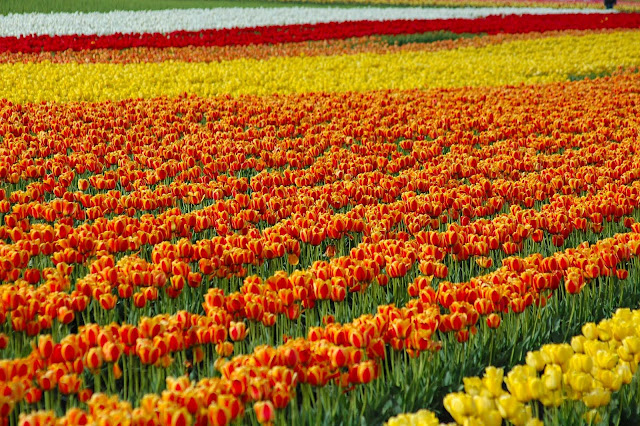 free holiday to amsterdam in netherlands with premium beautiful top agents