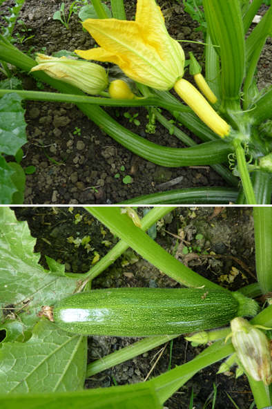 Using courgettes