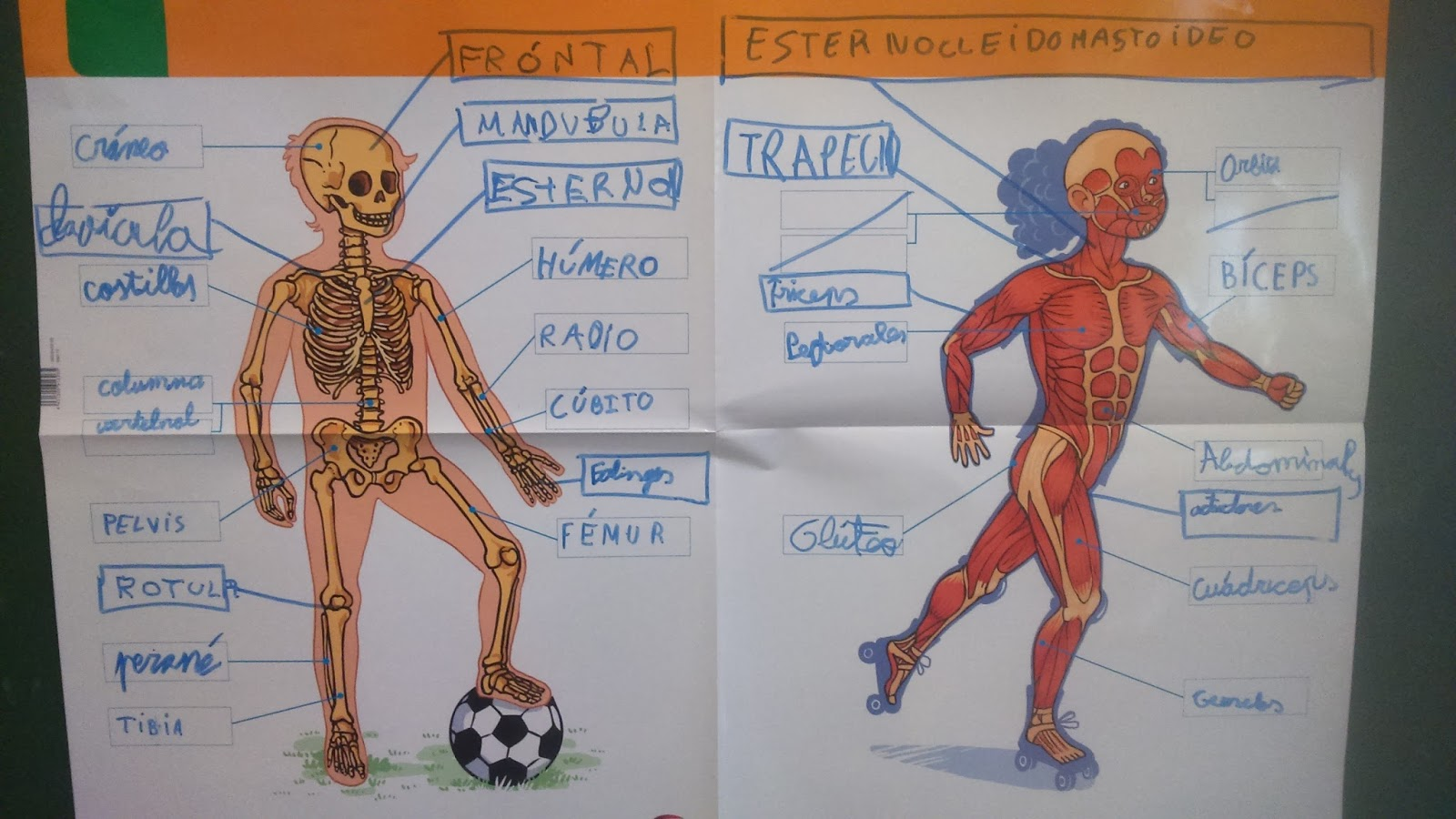 El maletín de Quílez: EL CUERPO HUMANO: LOS SENTIDOS, HUESOS ...