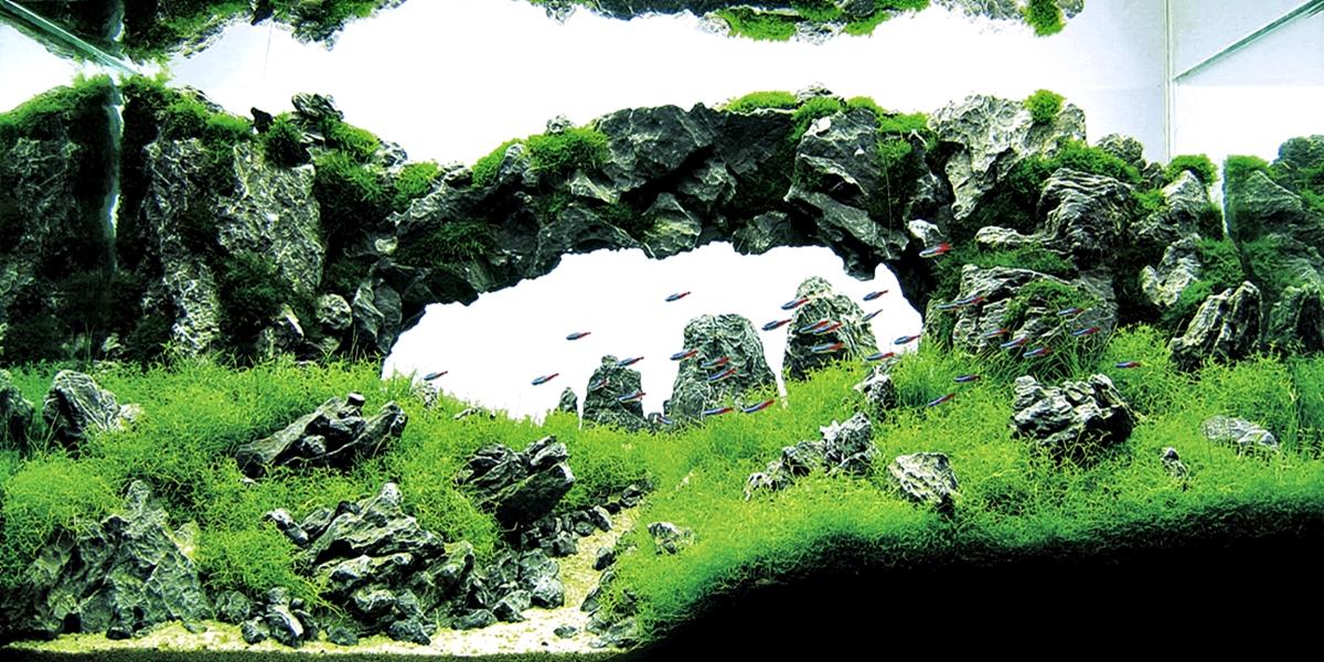 Resultado de imagen de takashi amano