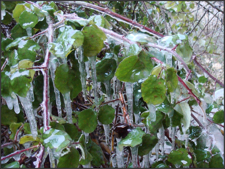 Invierno verde