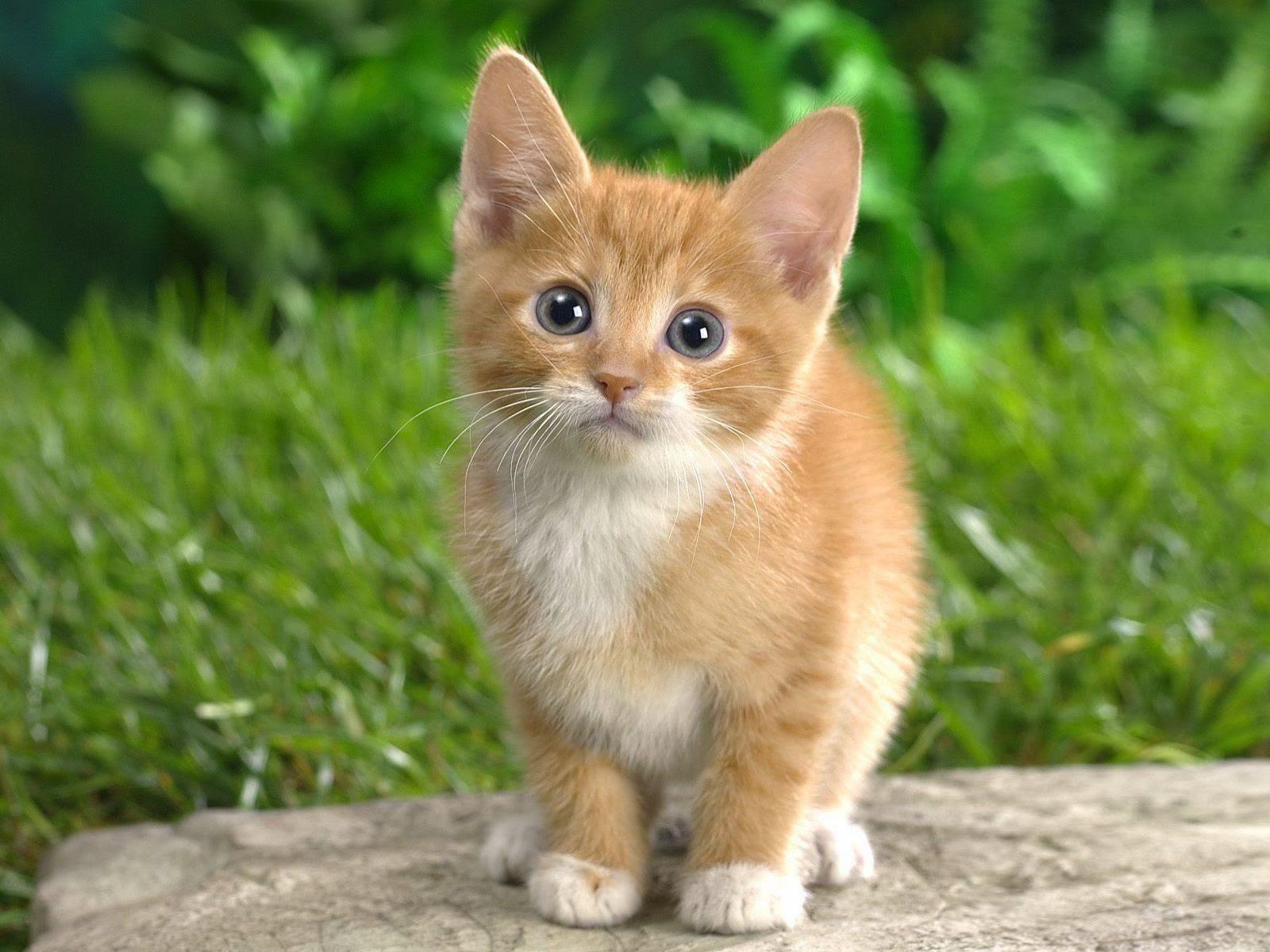 Pinkerellie s Blog The cutest kittens ever