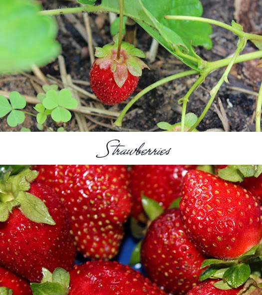 Strawberries Photos by Tori Beveridge