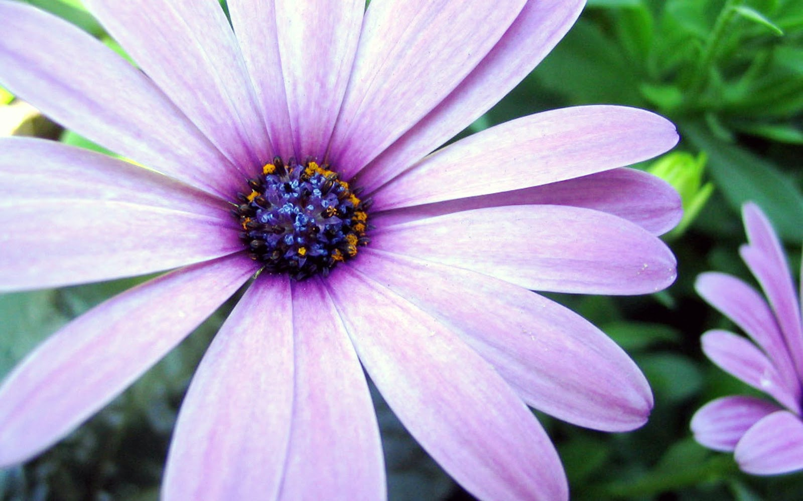 pretty purple flower wallpaper - photo #39