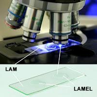 Lam ve Lamel - Mikroskop Camları