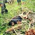 Cadáver é encontrado em Santana do Acaraú