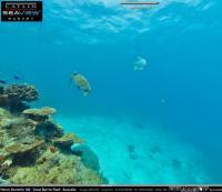 Il mare corallino sul web