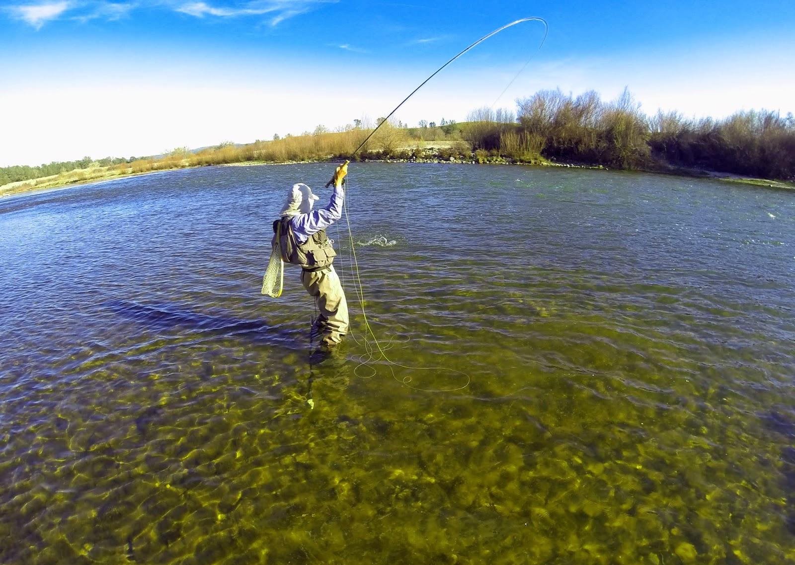 Jon baiocchi fly fishing news lower yuba river fishing for Trouts fishing report