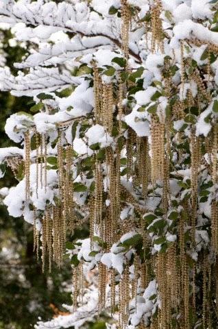 invierno crudeza frío inestabilidad humanidad