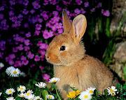 Los Bellos Animales los cuida Jahzeel siempre. (fondos animales conejos)