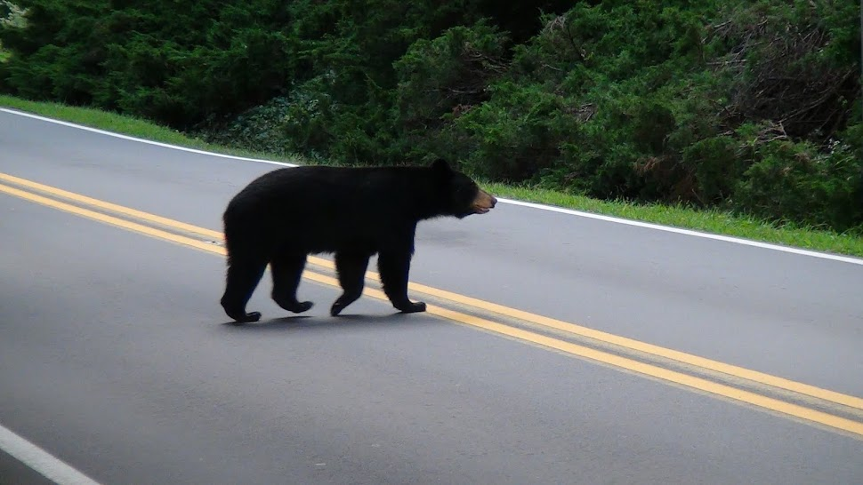 Why did the bear cross the road?  Click on the bear to find out.
