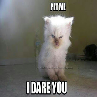 Angry Grumpy white cat - Pet me, I dare you! Funny photo