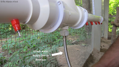 The Chicken Fountain attached to hose