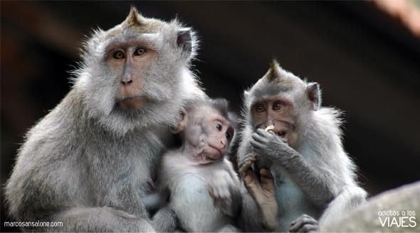 Bosque de los monos de Ubud indonesia