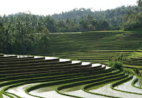 Rice terrace at belimbing village