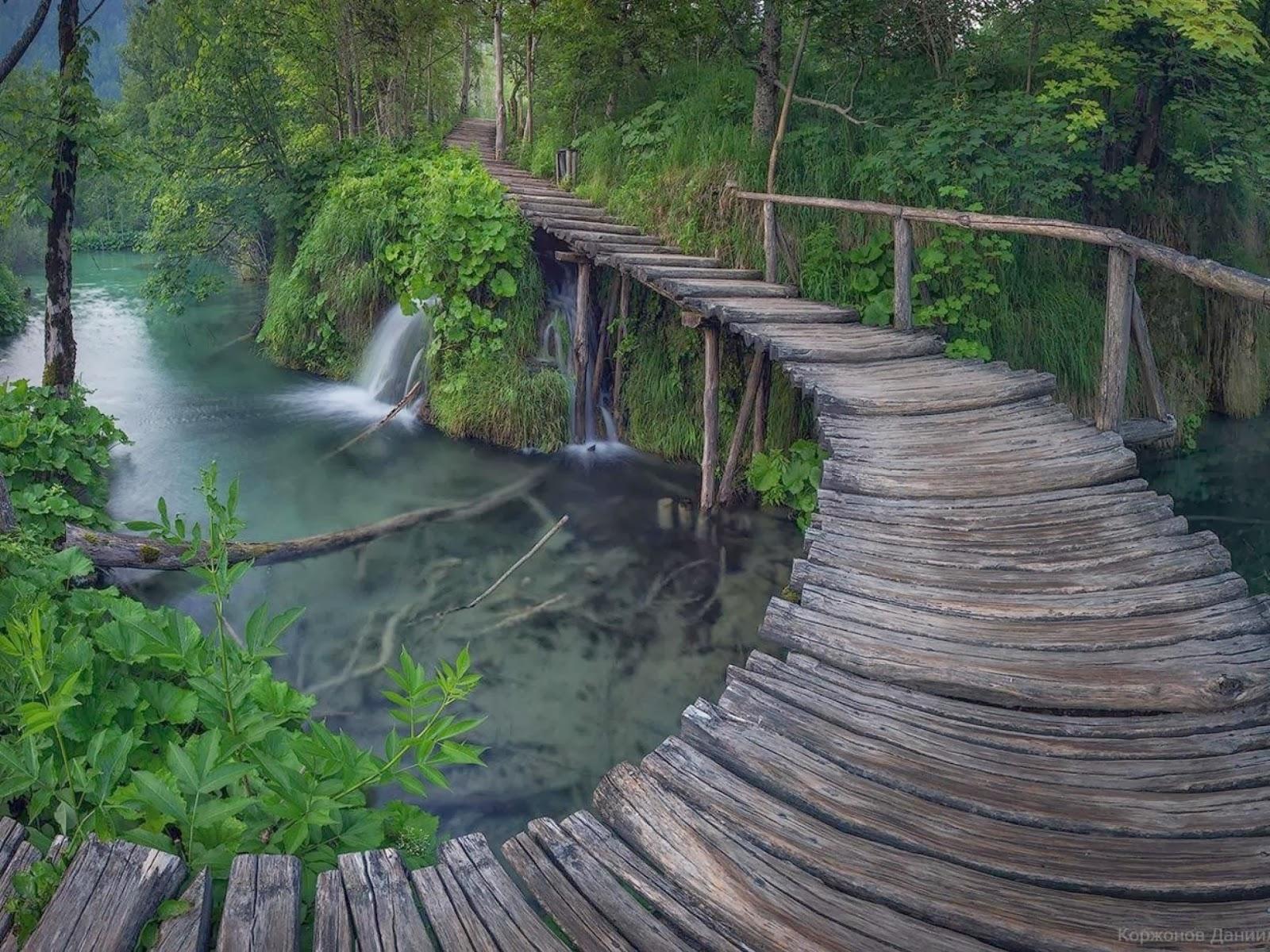 Encantador bosque Puente & Río