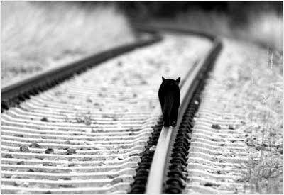 Este gato espera por su dueña en la estación de metro todos los días