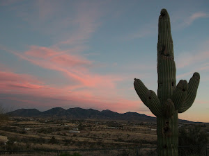 Saguaro Hill sunset