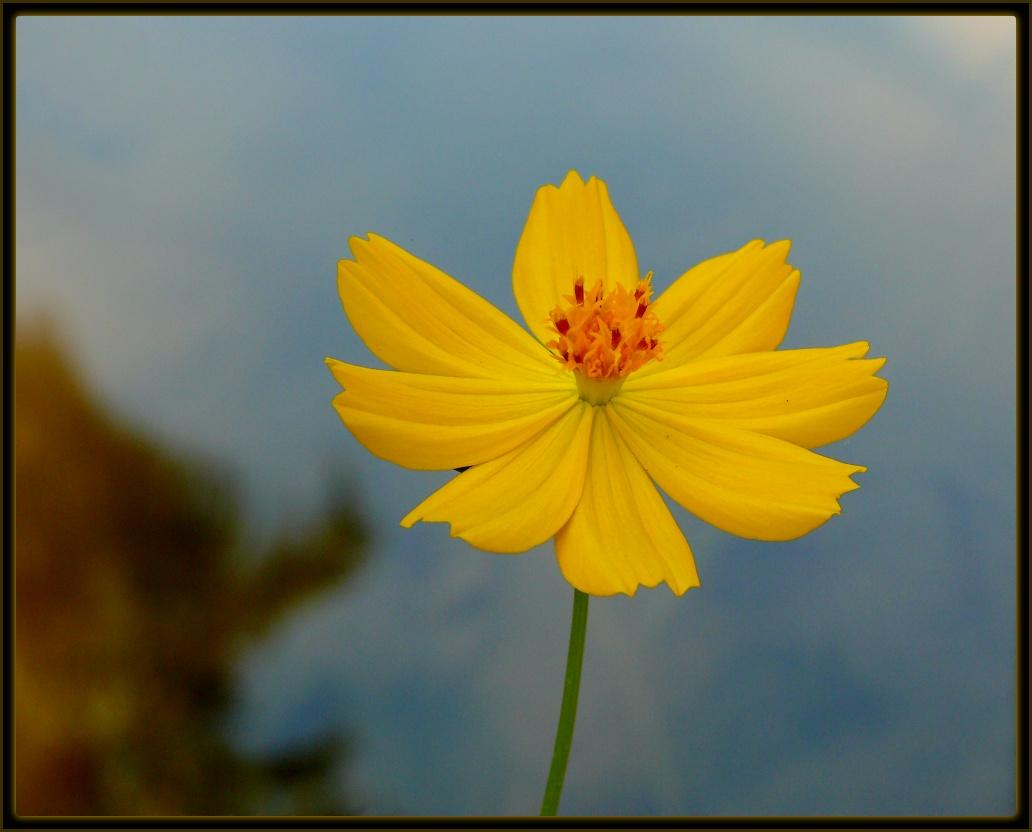 flor de jardim amarela:Casa de Pano: Poema de Adélia Prado