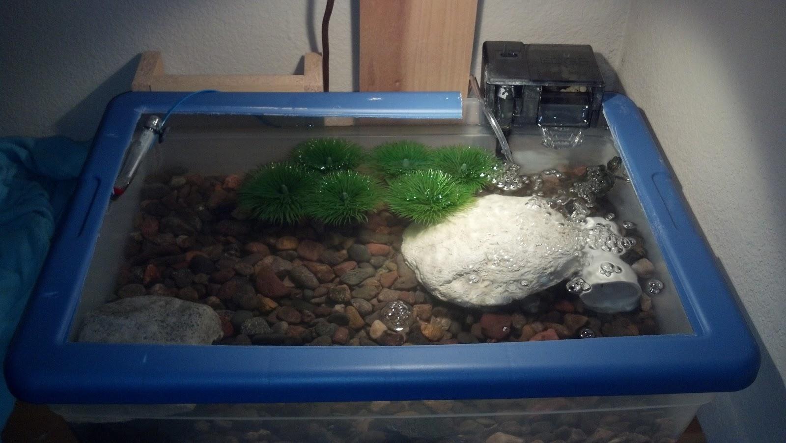 Small turtle habitat