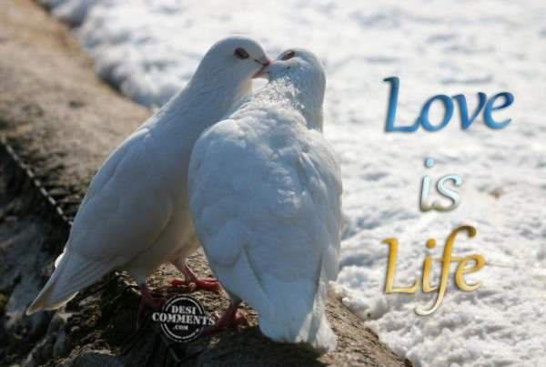 Love Is Life | Quotes,greetings,wishes,wallpapers,messages and animations,gif