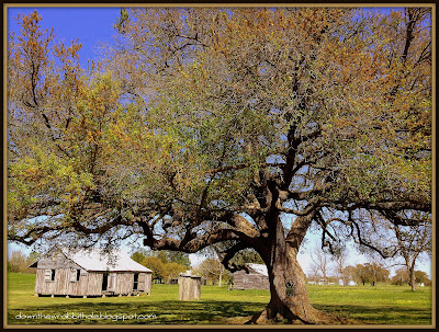 oak tree with slave cabins, St Joseph's slave cabins, New Orleans plantations, Louisiana