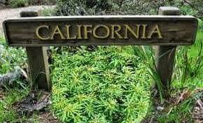 legalizar a maconha