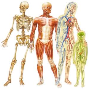 badan manusia