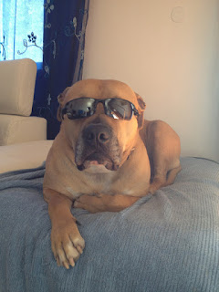 one cool dog