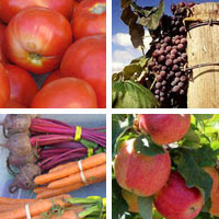 Fruits and vegetables grown in the Yakima River Basin