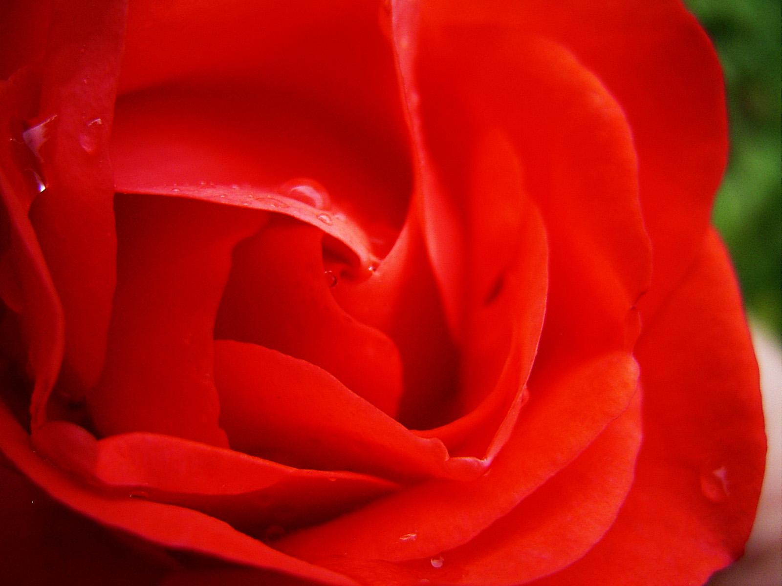 http://3.bp.blogspot.com/-KwgxssOtLkM/TnUcw8BbdcI/AAAAAAAABdo/MSBMd3sf8Kw/s1600/natural+flowers+wallpaper+2.jpg