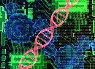 Engenharia Biomédica : O Curso e as Matérias