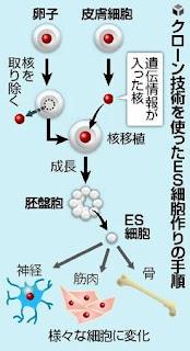 人間 ES細胞 作成