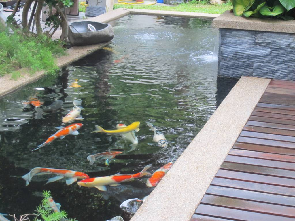 How to Build and Care for Your Koi Pond Koi Ponds 101