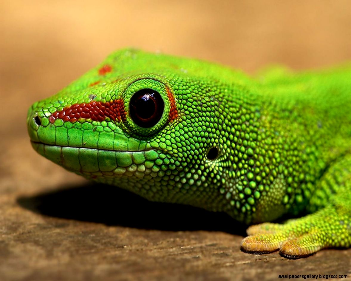 A 2 Z Reptiles Amphibians And Reptile...