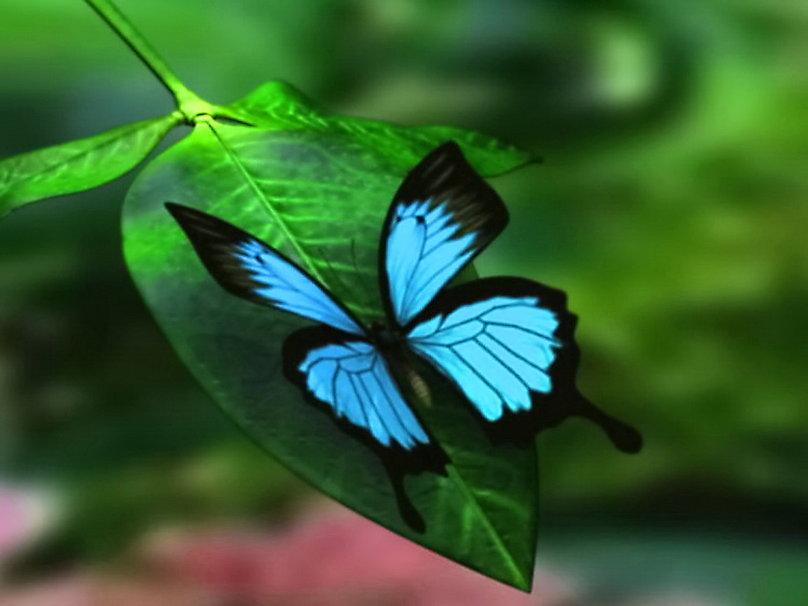 Sandra Tinitana: Especies de Mariposas